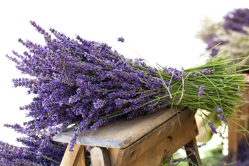 Lavender bouquet for herbal medicine